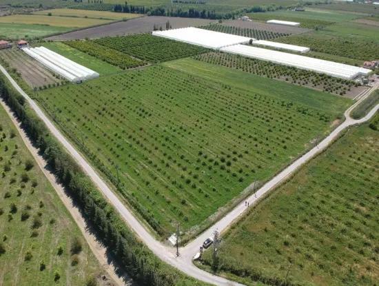 Oriya 26700 M2 Großen, Angelegten Garten Zitrone Eskiköy Auch Zum Verkauf