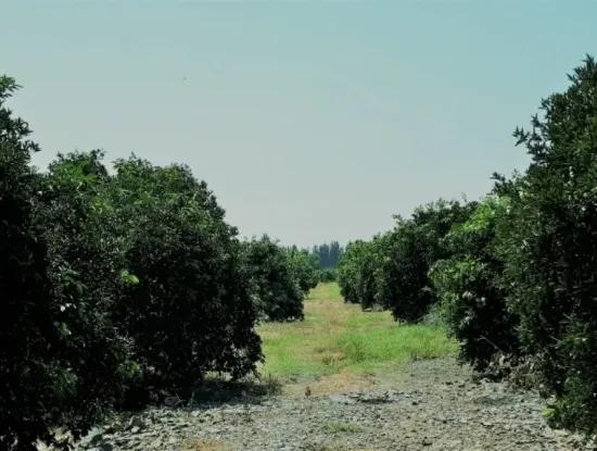 Tepearasi Schnäppchen Für Verkauf In Orange Grove