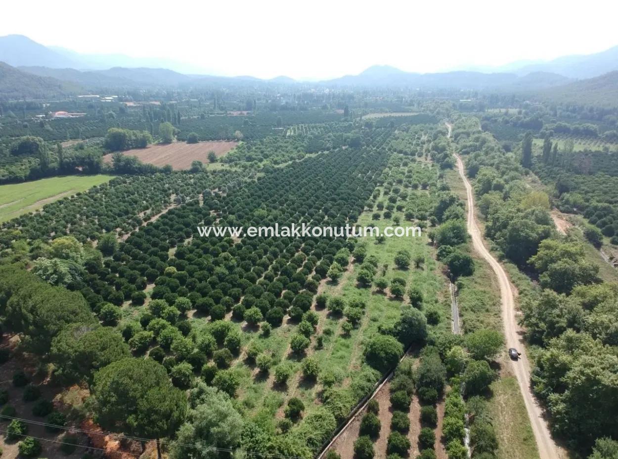 Orange Grove For Sale At Beyoba