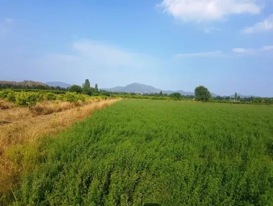 Fertile Field For Sale In Fethiye