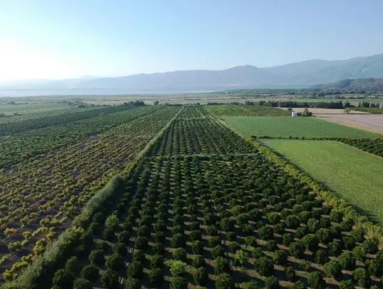 Tepearasi For Sale In Citrus Garden