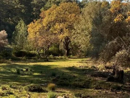 Investment Gocek Land For Sale Suitable For Te