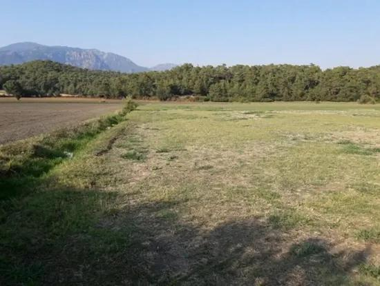 Suitable Land For Sale In The Village Of Koycegiz To The Greenhouse