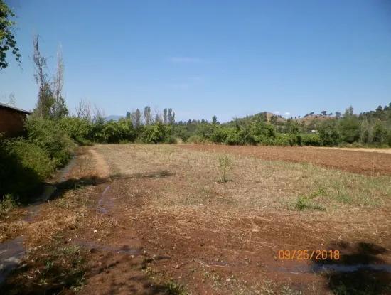 In Beyoba Of Fertile Land For Sale Bargain