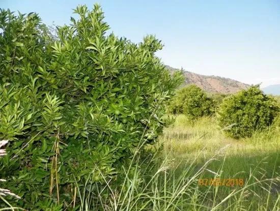 35500 M2 Citrus Garden For Sale In Köyceğiz Also Dogusbelen
