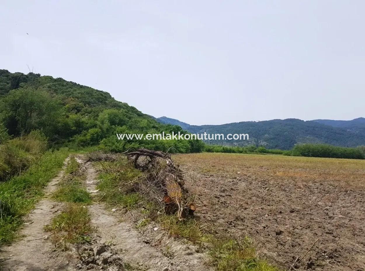 Ortaca Güzelyurt Ta 40.000 M2 Verimli Arazi Satılık