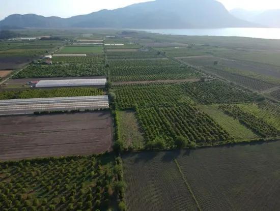 Ortaca Eskiköy De Satılık Nar Bahçesi, 10 000 M2
