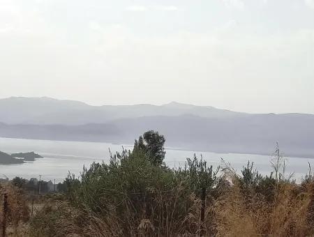 Köyceğiz Zeytinalanında Satılık Göl Manzaralı Müstakil Arazi