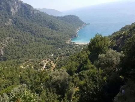 Fethiye Faralya Da Satılık Deniz Manzaralı Arsa, 6750 M2